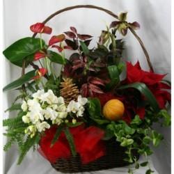 Cesto di piante - Multicolore