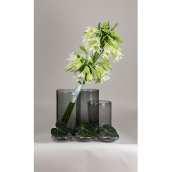 Bouquet of long lilies - white