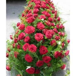 Blumen auf dem Sarg