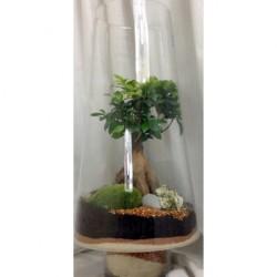Terrine von Pflanzen - Grün