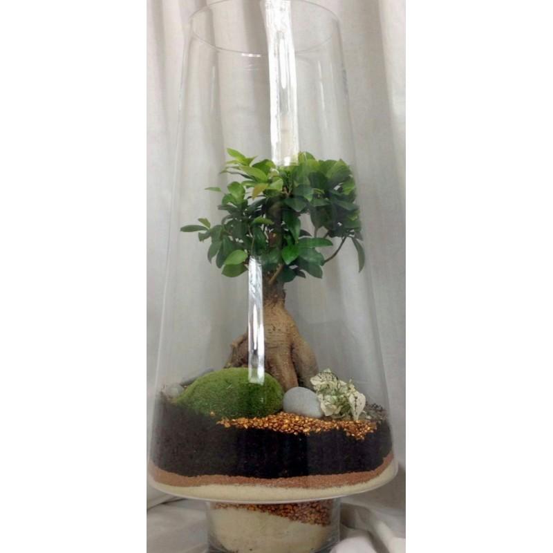 Terrine de plantes