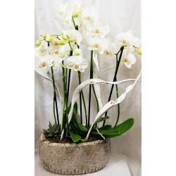 Terrine d'orchidées - vase...