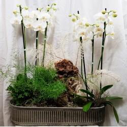 Pflanzen und orchidee