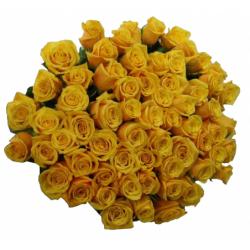 rose jaune, roses jaunes