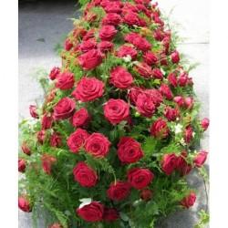 Cuscino - Rosso